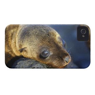Chiot mignon Blackberry d'otarie Coques iPhone 4 Case-Mate