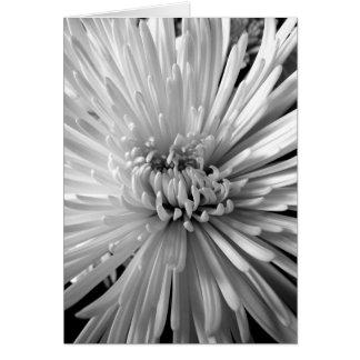 Chrysantheme-Blüte Karte