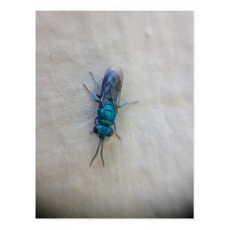Chrysididae - Kuckuckwespe Postkarte