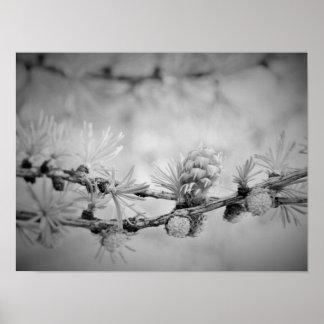 CK und weiße Lärchenblüte Poster