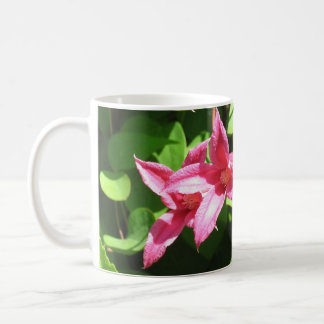 Clematis, Prinzessin Diana Kaffeetasse