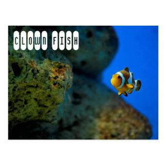 Clown-Fische Postkarte
