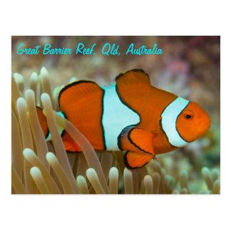 Clownfish auf der Great Barrier Reef Postkarte