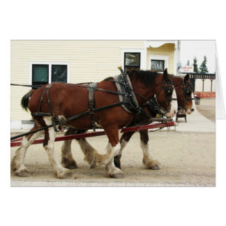 Clydesdale Team, Erbpark, Calgary, Alberta Karte