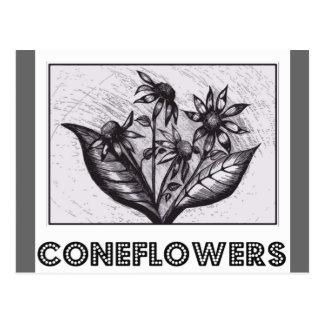 Coneflowers Postkarte