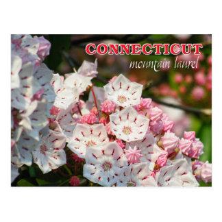 Connecticut-Staats-Blume: Berglorbeer Postkarte