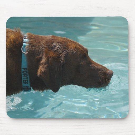 Cooler Wasserschokoladen-Labrador Mousepad