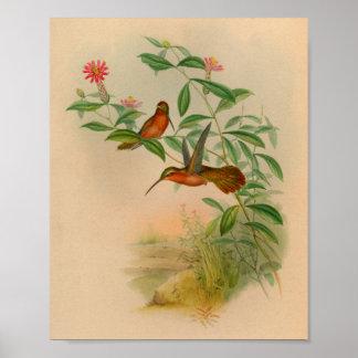Copie 1861 de colibri d'ermite de cru