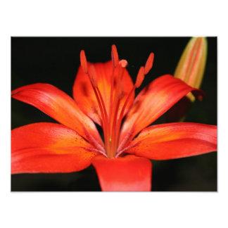 Copie asiatique rouge et orange de photo de plan