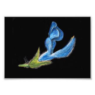 copie bleue de dessin de fleur impressions photographiques