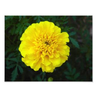 Copie de fleur photos d'art