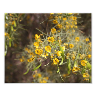 Copie de photo de fleurs de jaune