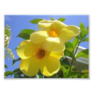Copie de photo de fleurs de trompette d or
