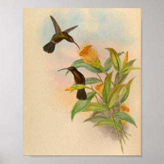 Copie De suie-couverte de colibri du cru 1861