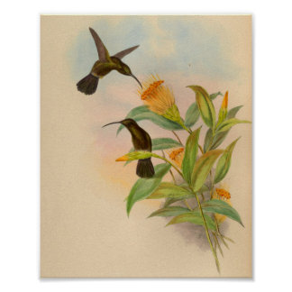 Copie De suie-couverte de colibri du cru 1861 Poster
