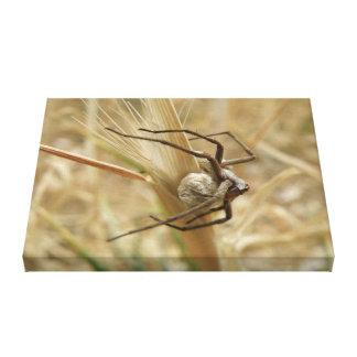 Copie de toile de sac d'araignée et d'oeufs toiles