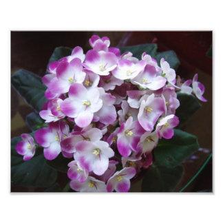 Copie impressionnante de fleur photographe