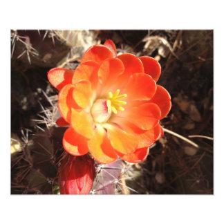 Copie orange de photo de fleur de cactus de hériss