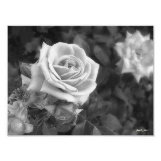 Copie rose élégante de fleurs photos d'art