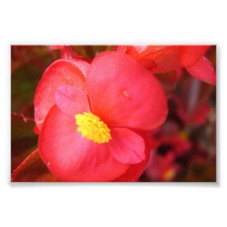 Copie rouge de fleur impression photo