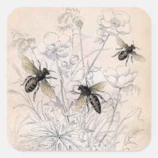 Copie vintage d'art d'abeille de miel sticker carré