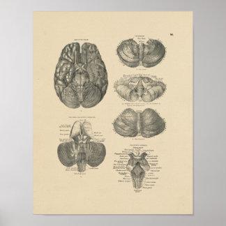 Copie vintage de l'anatomie 1880 d'esprit humain poster
