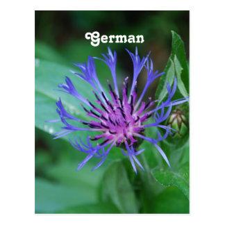 Cornflower Postkarte