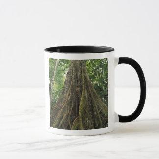 Costa Rica, Corcovado Nationalpark, gestützt Tasse