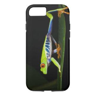Costa Rica, Rot-mit Augen Baum-Frosch (Agalychnis iPhone 8/7 Hülle
