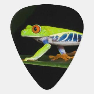 Costa Rica, Rot-mit Augen Baum-Frosch (Agalychnis Plektrum
