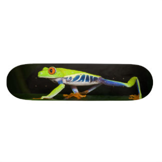 Costa Rica, Rot-mit Augen Baum-Frosch (Agalychnis Skateboardbretter