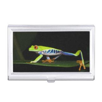 Costa Rica, Rot-mit Augen Baum-Frosch (Agalychnis Visitenkarten Etui