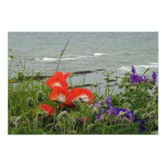 Côte de fleur sauvage photos sur toile