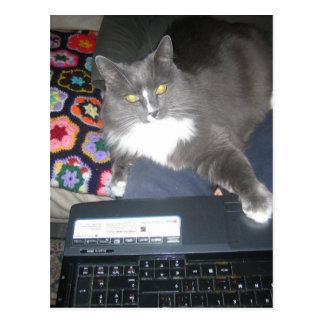 Couch-surfende Katze Postkarte