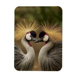 Couples d'oiseau de grue couronnés par gris magnets souples