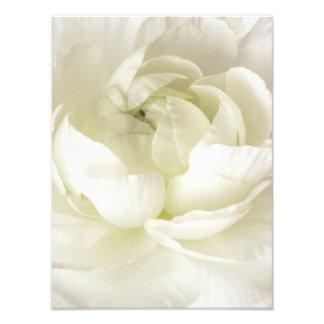 Coutume principale élevée de modèle de fleur de Ra Photographes