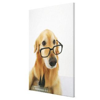 Cravate et verres de port de chien se reposant sur toiles tendues