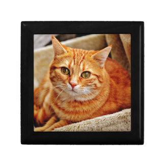 Cute Orange Cat Erinnerungskiste