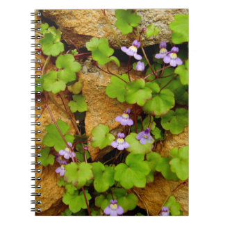 Cymbalaria Muralis gewundenes Foto-Notizbuch Notizblock