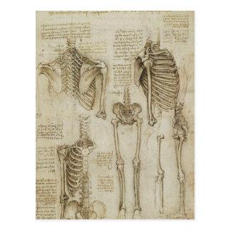 Da Vincis menschliche Skeleton Anatomie-Skizzen Postkarte