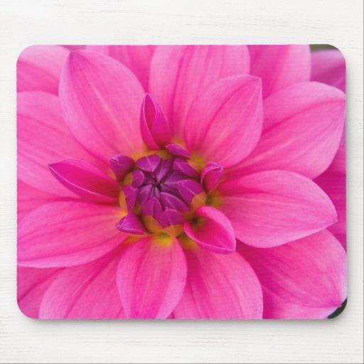 Dahlia rose tapis de souris