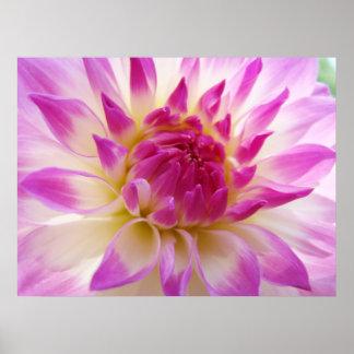 Dahlie-Blumenkunst druckt rosa weiße Poster
