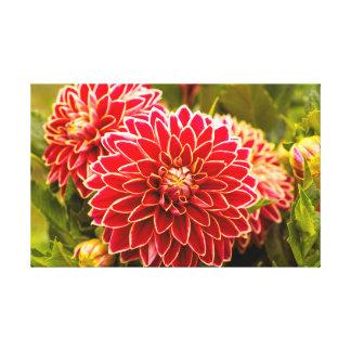 Dahlie in Blüte 11 Leinwanddruck