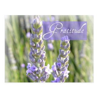 Dankbarkeits-Lavendel-Blumenpostkarte Postkarte