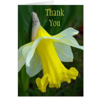 Danke, - gelbe Narzisse zu kardieren Karte