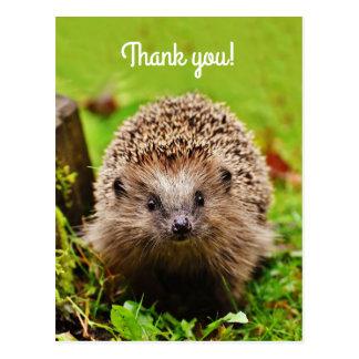"""""""Danke! Personalisierter, kleiner Igel Postkarte"""