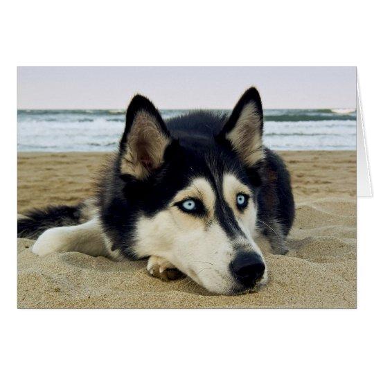 Danke sibirischer Husky auf Strand-Gruß-Karte Grußkarte