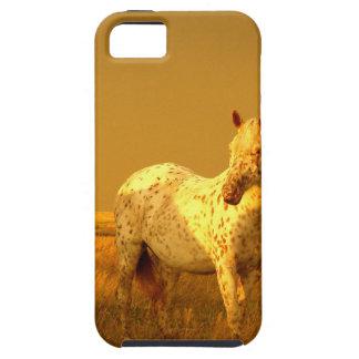 Das gepunktete Pferd im goldenen Glühen eines Etui Fürs iPhone 5