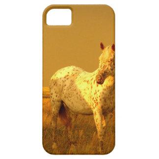 Das gepunktete Pferd im goldenen Glühen eines iPhone 5 Hülle