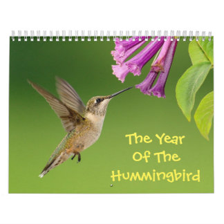 Das Jahr des Kolibri-Kalenders Abreißkalender